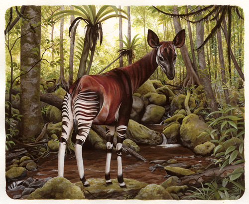 okapi illustration rae mariz stranger than imagination